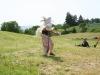 kaceni_maje2008_4.JPG