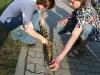 pomlazka2010_40